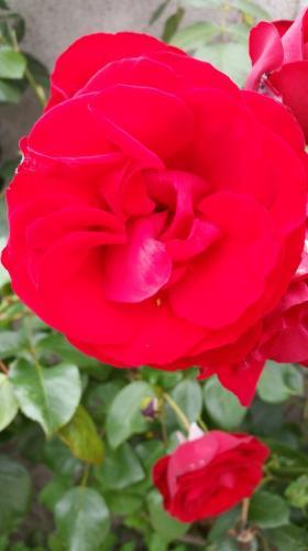 Egans-Bar-Rose3