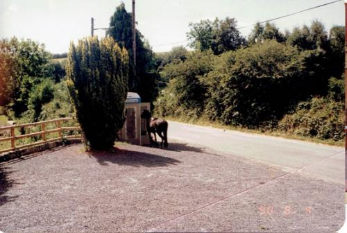 Egans Bar Parkbridge car park and Georgina Collins with her horse making a  telephone call c.1990